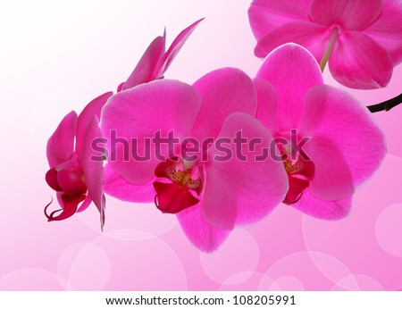 Purple orchid - close up with shallow DOF