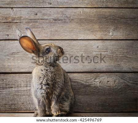 rabbit on wooden background