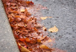 Rain and Leaves in Gutter. Water from heavy rain and thick leaves in a curb.