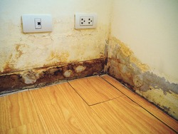 Rainwater penetrates through the cracks of the wall, destroyed floor. Water leak and damaged the wall and laminate floor which is near the plug and the telephone outlet.