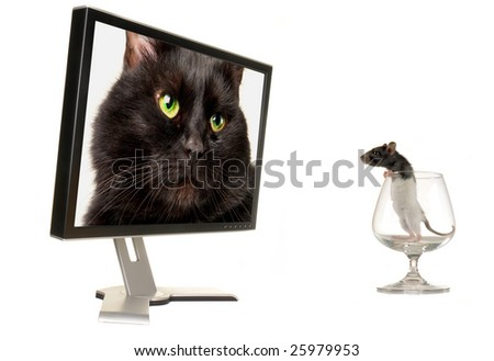 Rat on a background of the monitor - stock photo