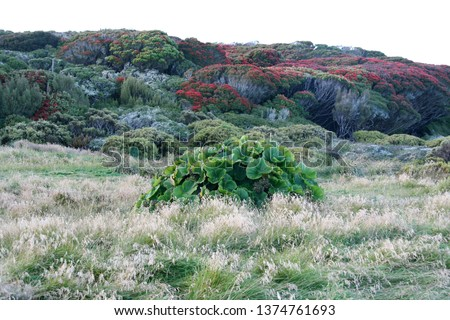 Rata Forest and megaherbs ... Sub-antarctic islands #1374761693