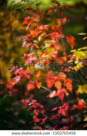 red autumn leaves on blurry background #1503705458