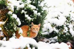 red cat under the tree in the snow