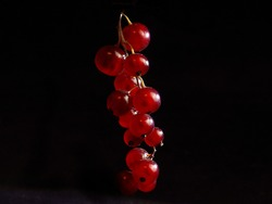 red  currant fruits on black background