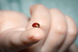 red ladybug on a child's finger