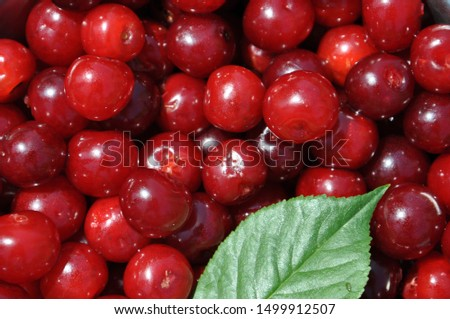 Red ripe cherry berries collected. Cherry fruit - juicy drupes with a round stone, sweet and sour taste