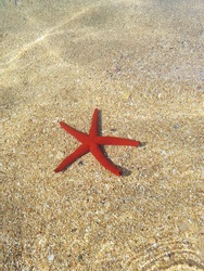 Red starfish on a pebble beach underwater