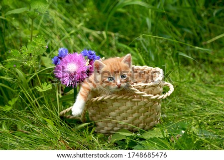 Red striped little kitten in a wicker basket on green grass with pink and blue flowers. Gift for a child, for a beloved woman