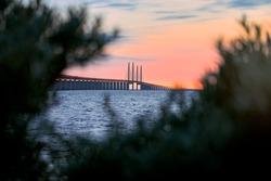 Öresund bridge hides behind bushes and trees with view over the Öresund strait under sunset.