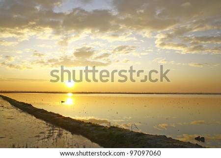 Rice field sunset - stock photo