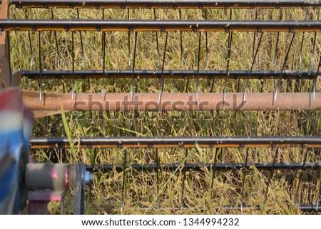 ็Rice Harvest in  Suphanburi, Thailand #1344994232