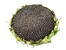 ripe seeds in a sunflower.