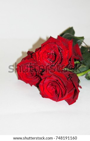 rose on a white background #748191160