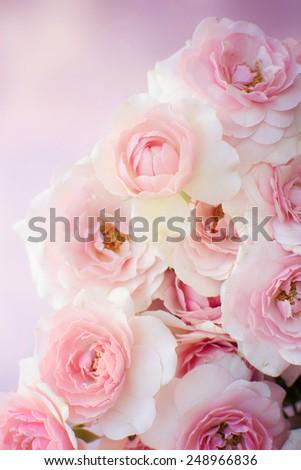 roses background