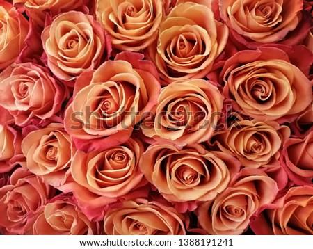 Roses Orange Crush Flowers  Beauty  #1388191241