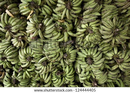 Rows of ripe yellow bananas in Amazon