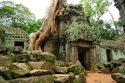 Ruin of Ta Prohm Temple, Cambodia