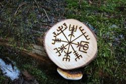 Runic sign on a tree (pine). Scandinavian runes.