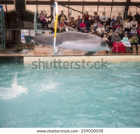 RUSSIA, ROSTOV-ON-DON- FEBRUARY 1- Dolphin jumping through hoops at the Rostov dolphinarium on February 1, 2015 in Rostov-on-Don