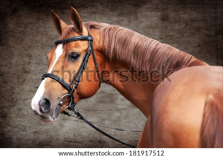 Russian Don horse, portrait on grunge background