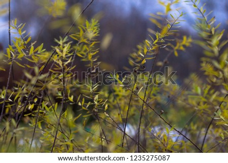 Russian open spaces and forests. Flora. Floral background. Flora of Russia. #1235275087