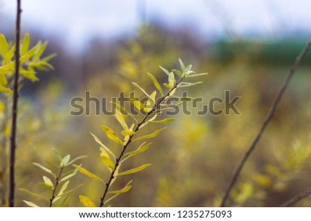 Russian open spaces and forests. Flora. Floral background. Flora of Russia. #1235275093