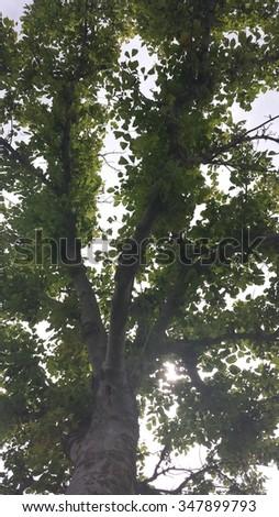 Ã�rvore comum vista de baixo Foto stock ©