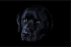 Sad dog. An adult dog is saddened by something. Black dog on a dark background. The atmosphere is not calm.