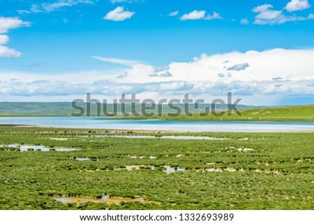 Sanjiangyuan Nature Reserve, the highest elevation natural wetland, Tibet, China #1332693989