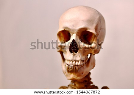 Scary cheerful smiling toothy jaws and human skull. Zdjęcia stock ©