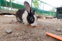 scary rabbit eating a carrot under a log, hidden