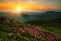scenic image red spring flowers on slopes carpathian mountains, fabulous panorama morning dawn, discover yourself beautiful places