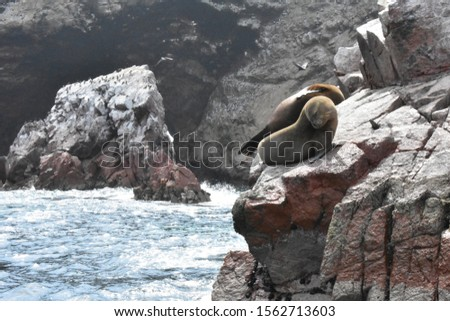 sea lions in the sea and on rocks