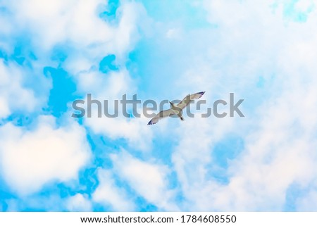 seagull in the sky. blue sky . White clouds . seagull from below.  Stock photo ©