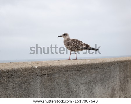 seagull perched on a ledge