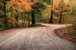 seasonal view of a macadam road through forest in fall