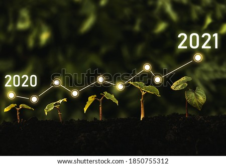 Seedling are growing from soil with growth comparative year 2020 to 2021. Concept of business growth, profit, agriculture, development and success	 graph.