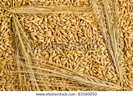 seeds and barley grains surface top view