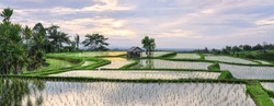 (Selective focus) Stunning view of the Jatiluwih rice terrace fields with some farmer hut's. Jatiluwih rice fields are a series of rice paddies located in Tabanan Regency, north Bali, Indonesia.