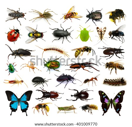 Set of insects on white #401009770
