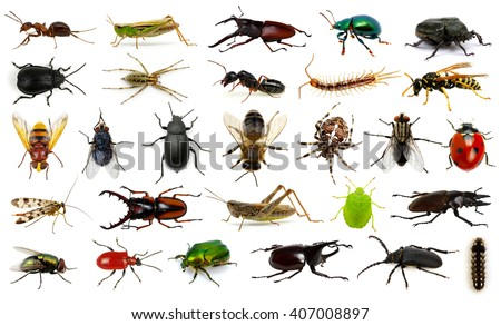Set of insects on white #407008897