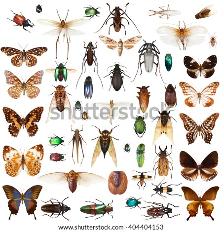 Set of insects on white background with clipping path #404404153