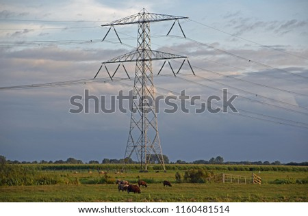 sheep are standing in the meadow under the electricity pylon while the sun slowly sets in the province of Utrecht #1160481514