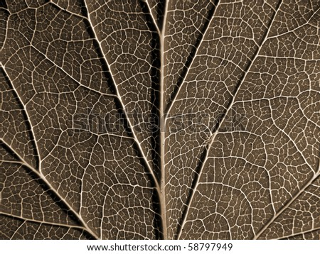 sheet of the birch