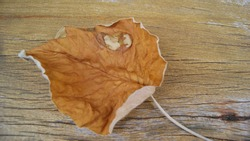 Sheet. Small brown leaf on wooden construction background in zoomed-in top view in selective focus