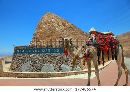 """""""Ship"""" of the desert. Brightly decorated camel on the highway that runs in the Dead Sea Valley. On the side of a highway pointer sea level - stock photo"""