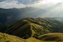 Shola Grassland Ecosystem, Shola and grassland together form the shola-grassland complex or mosaic.