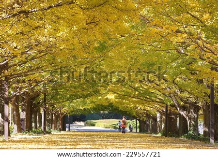 ?Sidewalk and big tree with yellow leaf at park in beautiful autumn season?