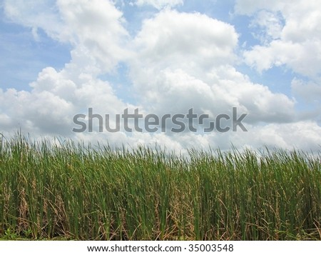 Simply grass, clouds, and sky